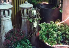 Was das Herz begehrt: Von Tannenbäumen, Winterdeko und hübschen Pflanzen