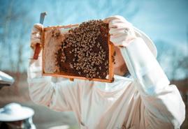 Was Kieler Bienen in einem Roman zu suchen haben