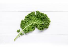 Gesund, nachhaltig und richtig lecker