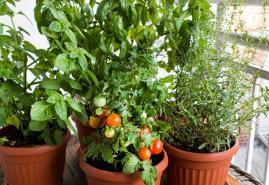 3 Tipps für Garten & Balkon