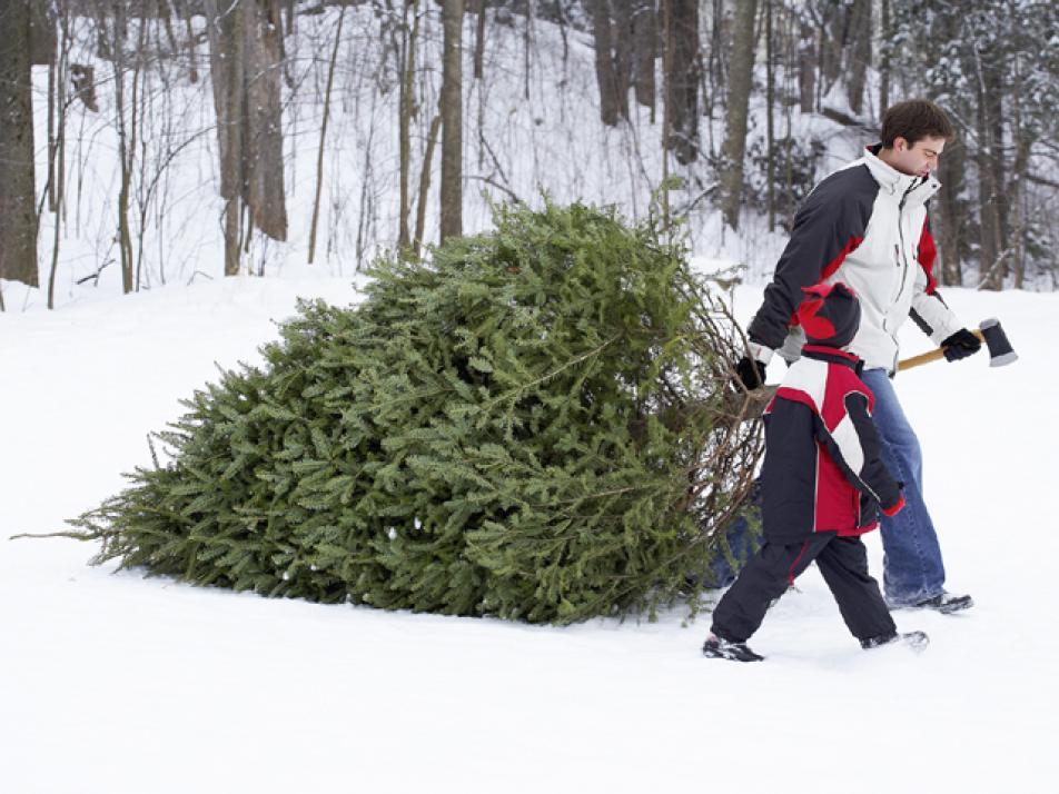 Weihnachtsbaum Kaufen Kiel.Freie Baumwahl Für Alle Kielerleben