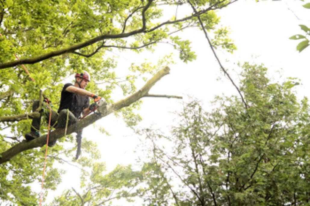 Kletterausrüstung Baumpflege : Baumpfleger aus leidenschaft kielerleben