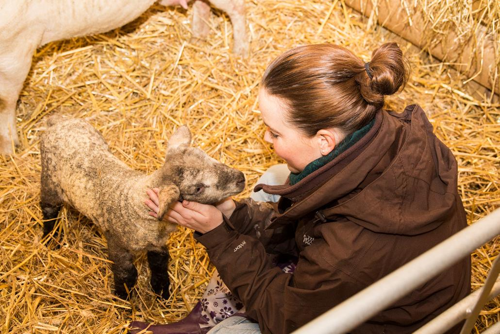 """In das kleine Lamm """"Krusti"""" verliebe ich mich auf den ersten Blick"""