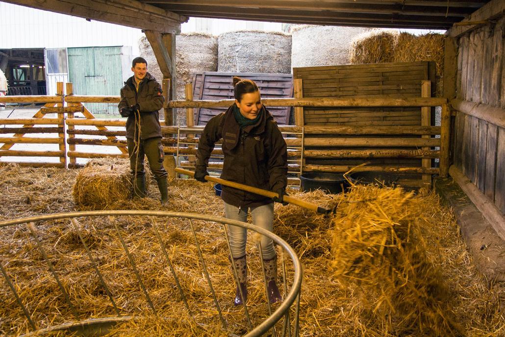 Gemeinsam mit Ante verteile ich frisches Stroh in den Stallungen