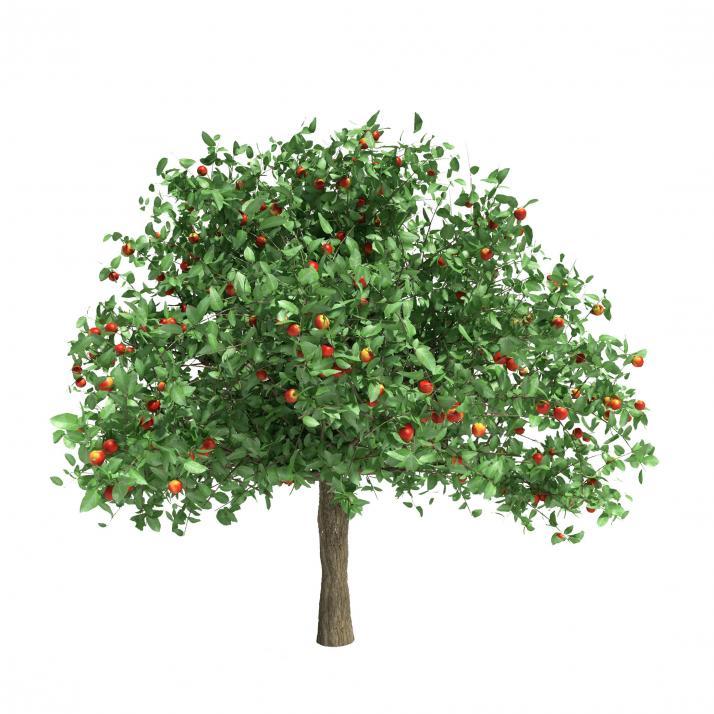 Jetzt ist die richtige Zeit, um Obstbäume anzupflanzen