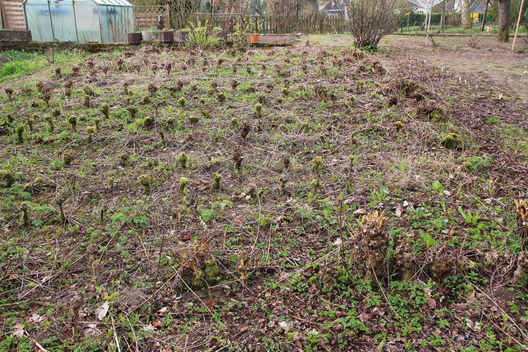Familie Sell pflanzt in ihrem Garten selbst Weiden an