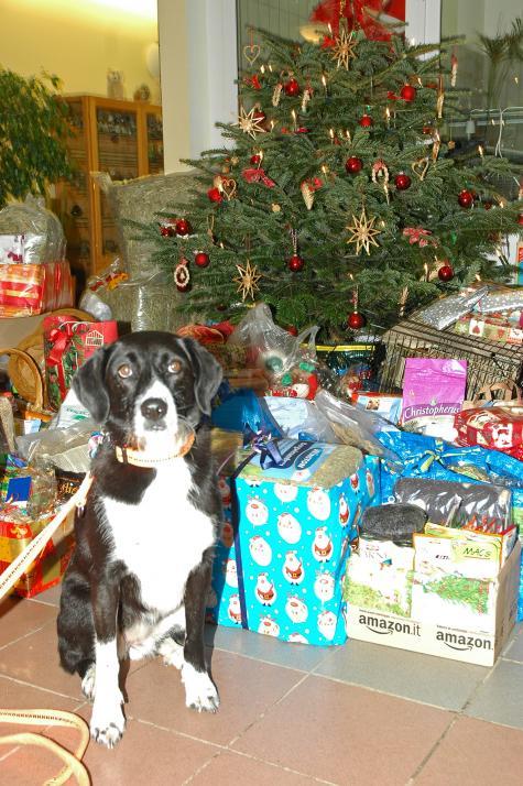 Die vierbeinigen Bewohner freuen sichüber gespendete Geschenke