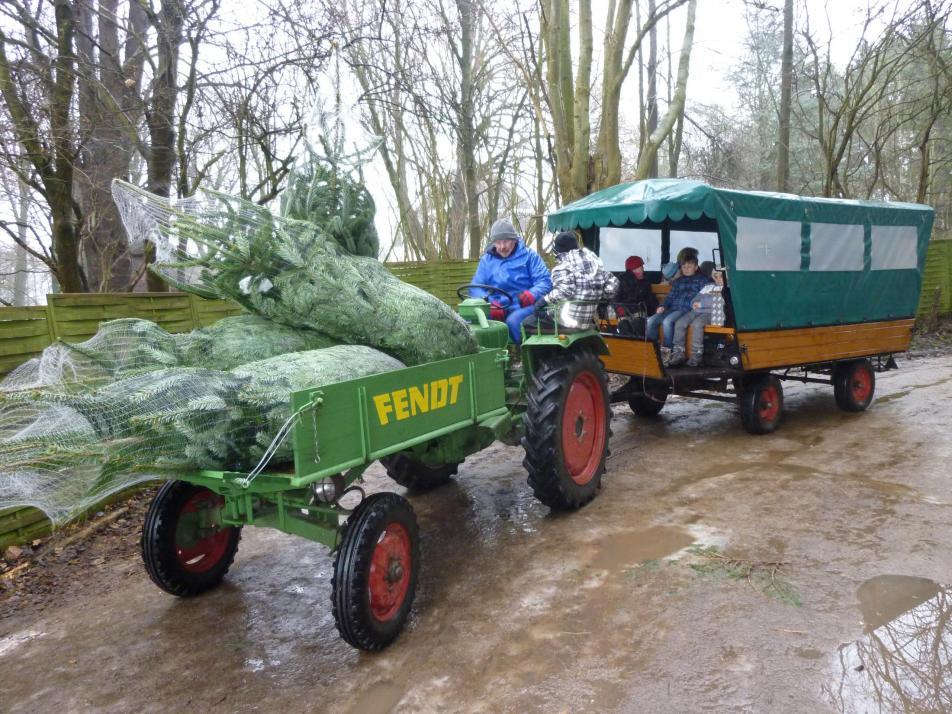 Beim Weihnachtsbaum kann mit Steiskal gespart werden