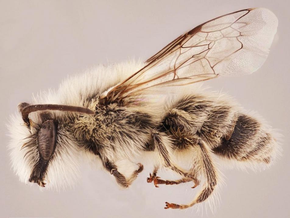 Der Kieler Entomologe ist Namensgeber einer neuen Bienenart
