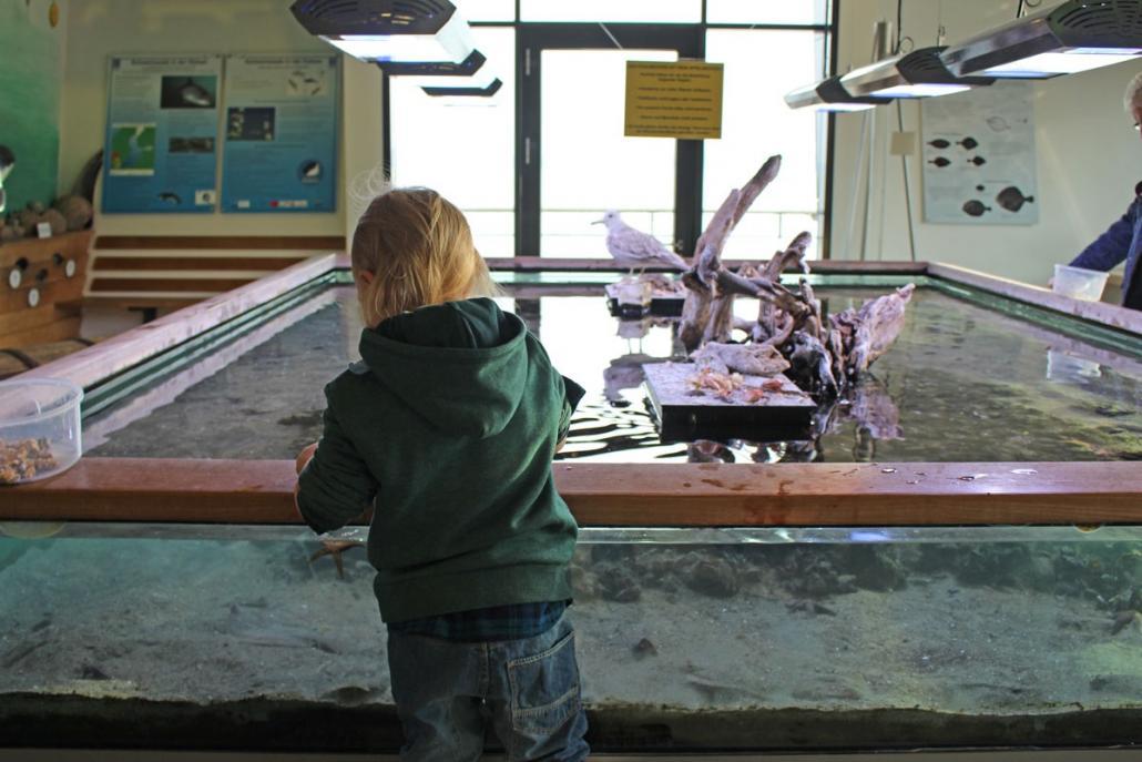 Für kleine (und große) Kinder ein riesiges Highlight: das große Fühlbecken im Ostsee Info-Center in Eckernförde