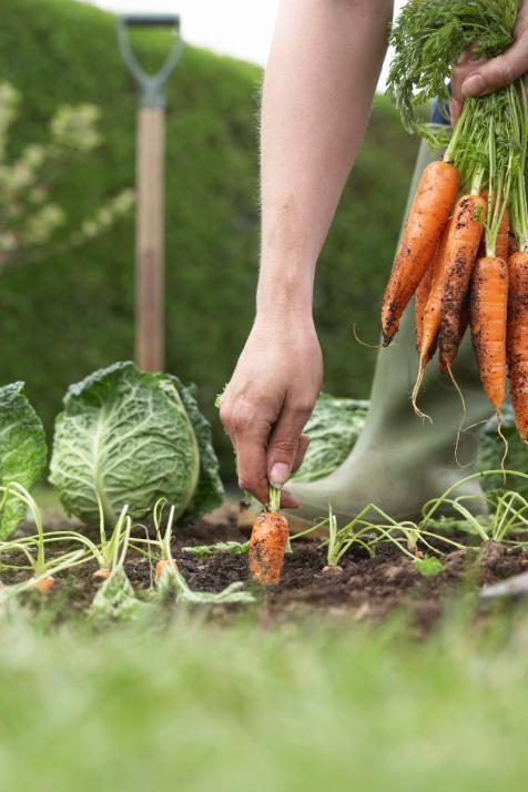 Mit Tipps vom Profi führt die Gartenarbeit zum Erfolg
