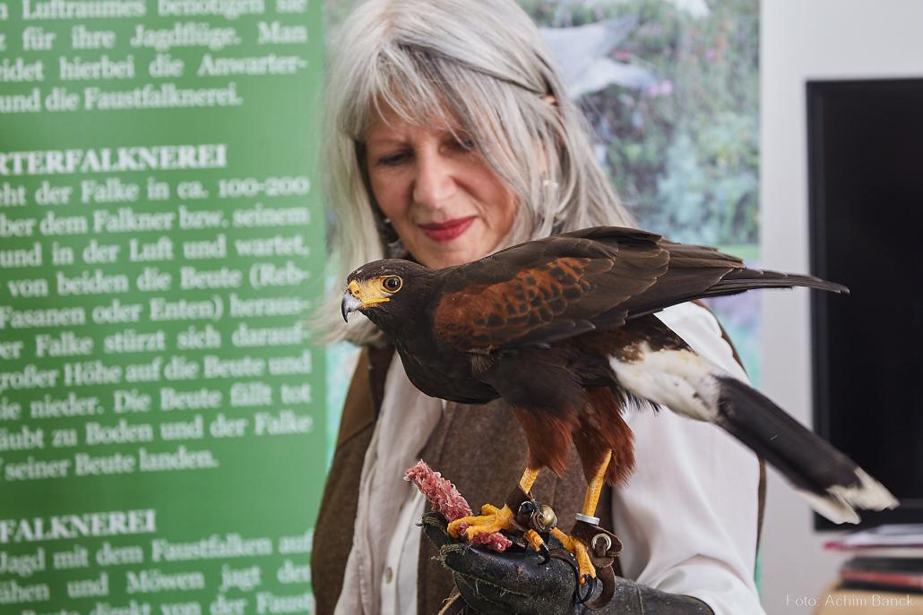 """Bei der """"Outdoor 2018 jagd & natur"""" werden auch spannende Vorführungen mit abgerichteten Falken gezeigt"""