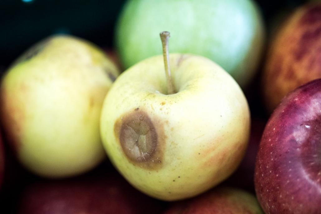 Oft reicht eine kleine Delle, damit der Apfel aussortiert wird. Diese Äpfel …