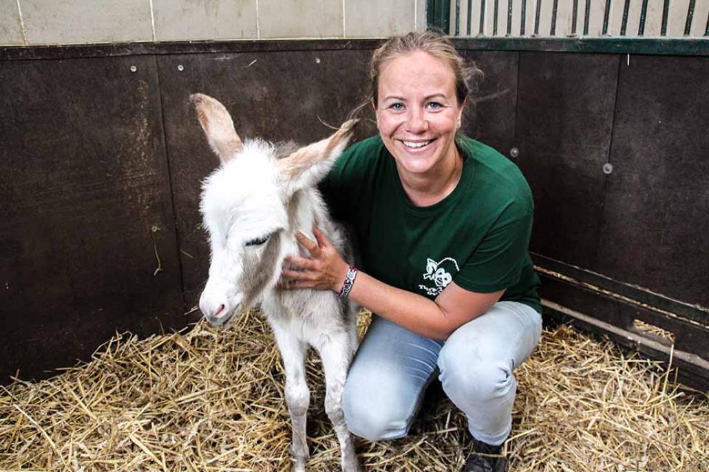 Highlight eines Tierpflegers: Tierbabys! Eselfohlen Hinnerk hat es Mediaberaterin Gesa angetan