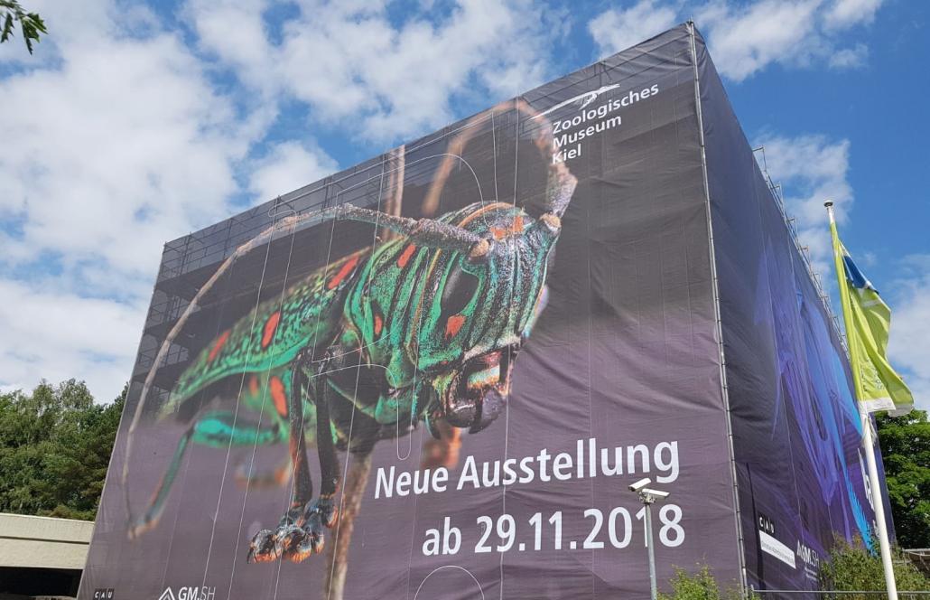 So präsentiert sich das Zoologische Museum noch bis 2019