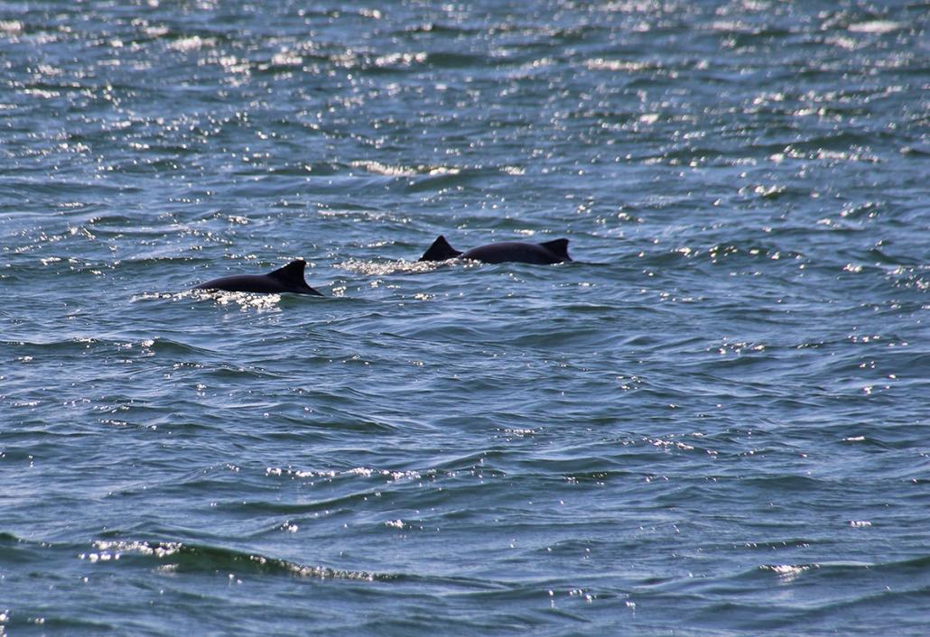 Mit Paul McCartney auf Schweinswal-Safari