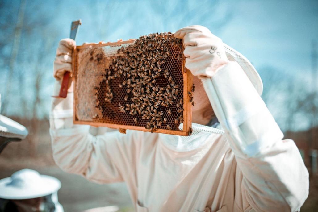 Von der Wabe ins Buch: Die Kieler Bienen