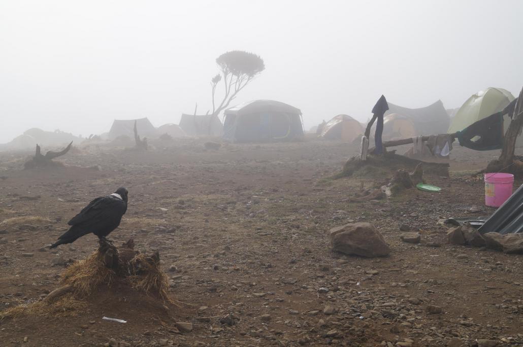 Dichter Nebel umgab das Camp am vierten Tag. Es war nicht nur kalt, sondern auch ganz schön nass