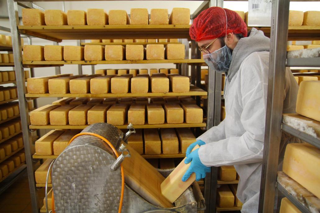 """Die """"Brote"""" des Holsteiner Tilsiters müssen von Hand aus dem Regal genommen und geputzt werden"""