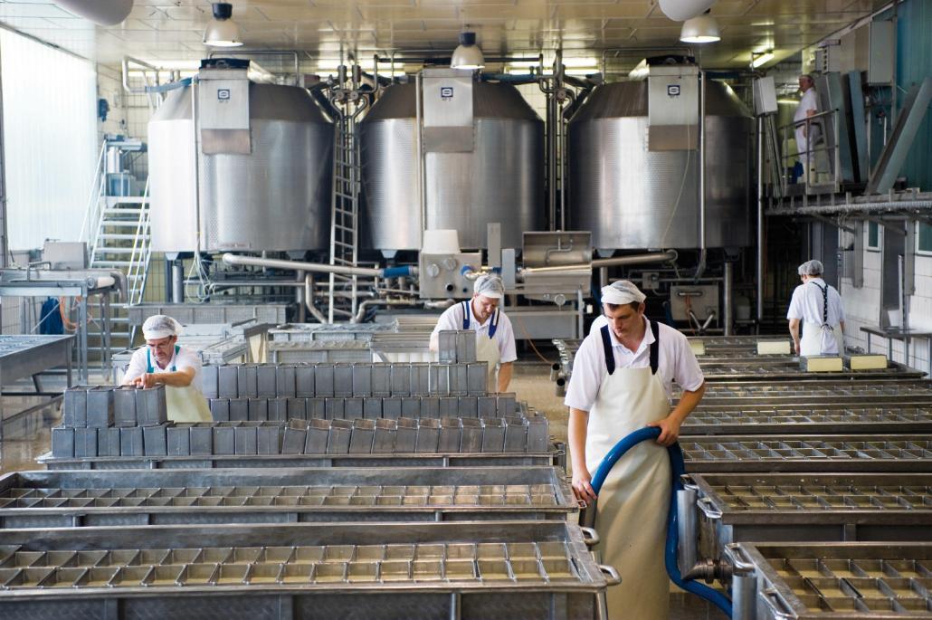 Hier wird Käse von Hand gefertigt: Die Formen werden mehrmals täglich gewendet damit der Holtseer Tilsiter seine Brotform erhält