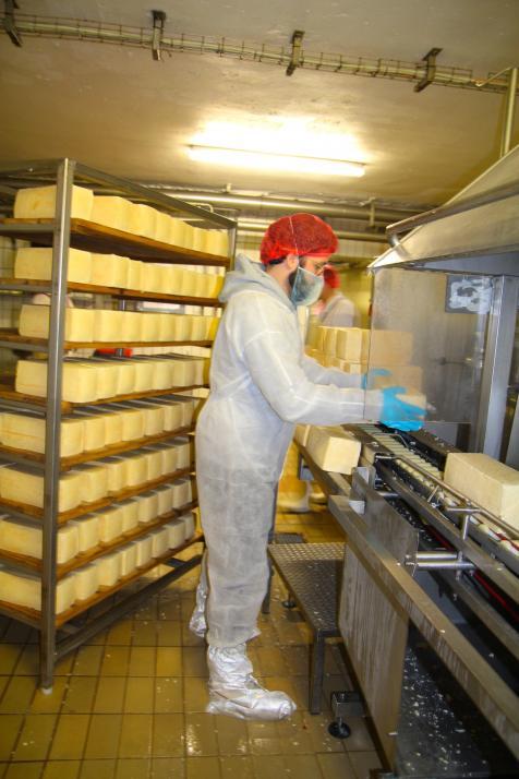 Jeder Holsteiner Tilsiter erhält durch die Rotschmiere seinen typischen Geschmack