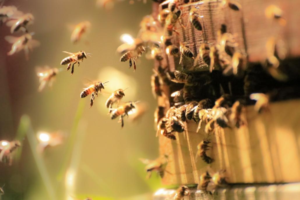Weltbienentag sollte jeder Tag im Jahr sein: Denn die kleinen Brummel müssten geschützt werden!