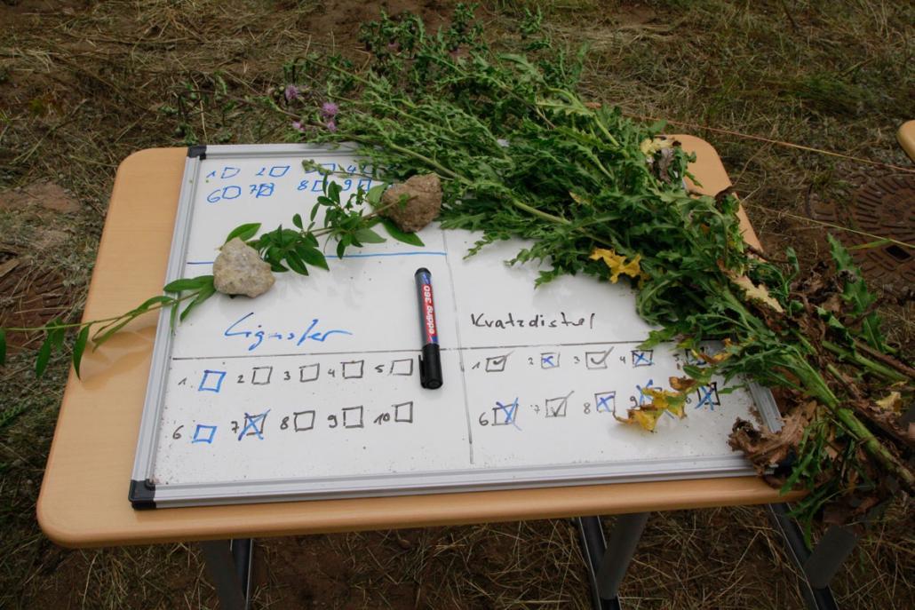 Die Pflanzen werden sortiert und bestimmt