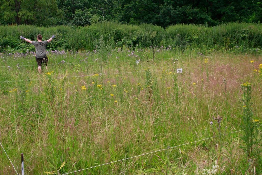Die Wildkräuter-Wiese ist nur ein erster Schritt – das Greenteam hat noch viele Pläne