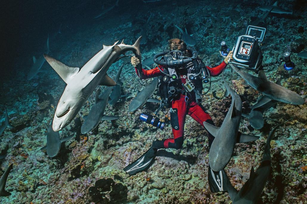 """Für """"700 Sharks"""" tauchte ein Forscher-Team in Französisch-Polynesien hinunter zur weltgrößten Gruppe Grauhaie"""