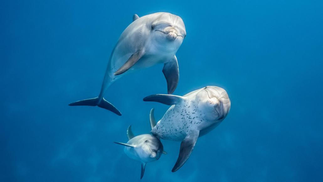 """Das """"International Ocean Film Festival San Francisco"""" präsentiert das neueste Abenteuer von Disneynature: Delfine"""