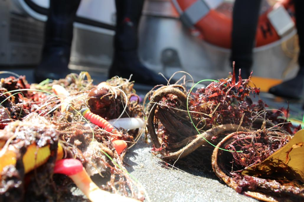 """Das gefährliche Gut: """"Geisternetze"""" lösen sich zu Mikroplastik auf und werden zur Todesfalle für Meerestiere"""