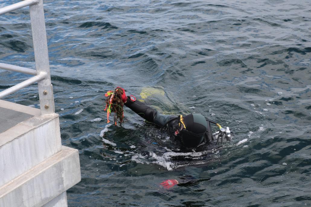 Wenig später holt sie Netzreste und Plastikmüll aus der Ostsee