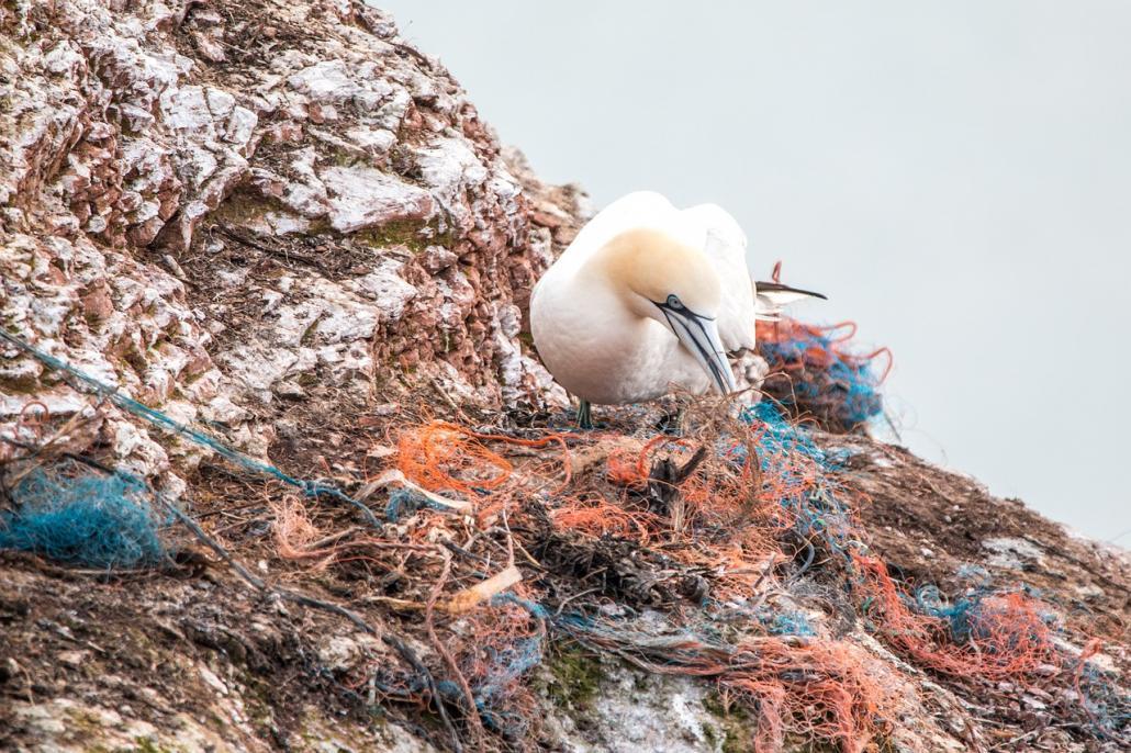 Plastik hat in unseren Meeren einfach nichts zu suchen. Diese Aufnahme verdeutlicht das Problem.