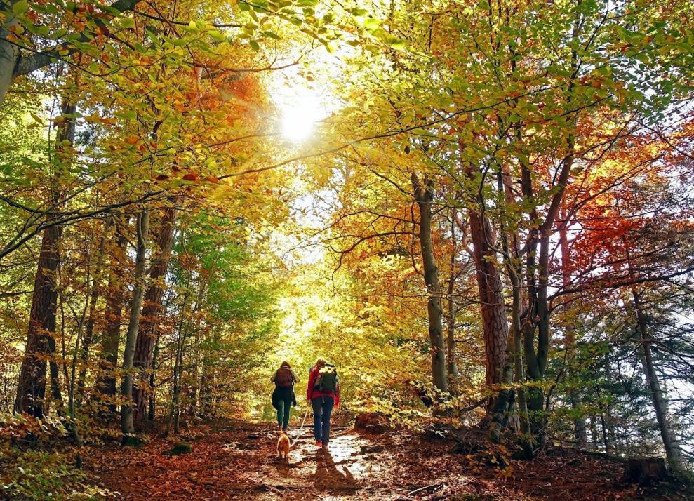 Wir geben euch vier Tipps, wie ihr die verschiedenen Herbsttage je nach Lust und Laune verbringen könnt.