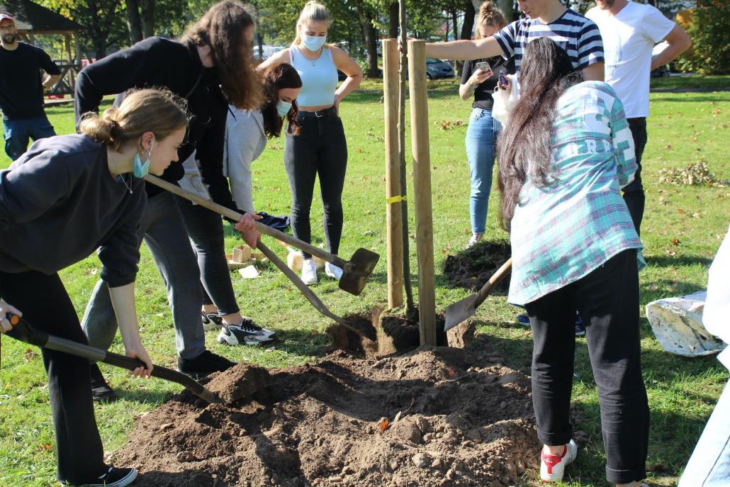 Mit vereinten Kräften wird der Baum gepflanzt.