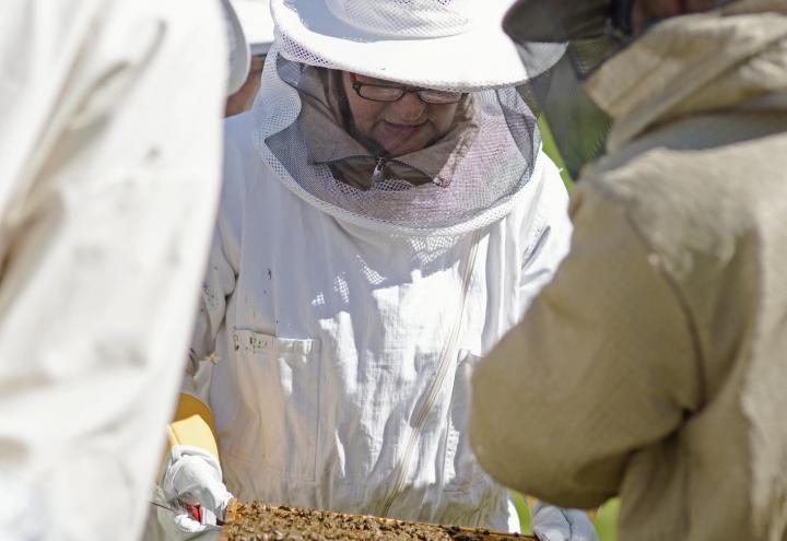 Kieler Honig – So schmeckt die Stadt