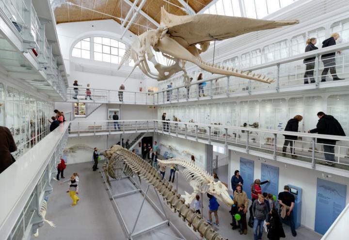 Museen am Meer