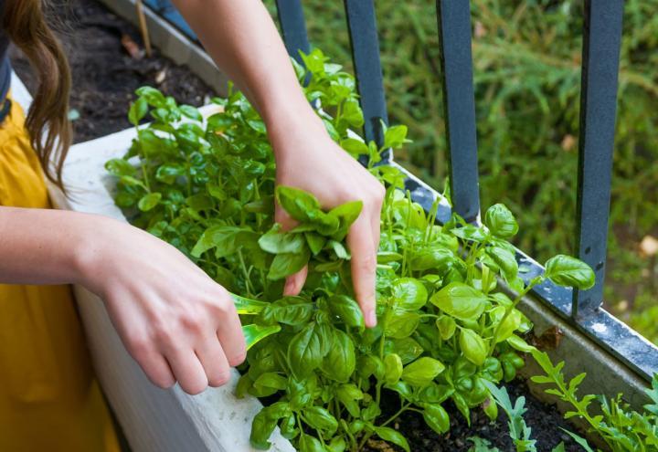 Tipps für den Balkon – eigenes Gemüse ziehen