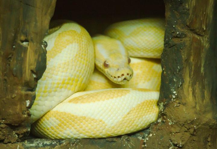 Schlangenalarm in Vieburger Gehölz